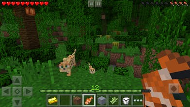 Minecraft: Pocket Edition - Craft, create, and explore Now on iPhone
