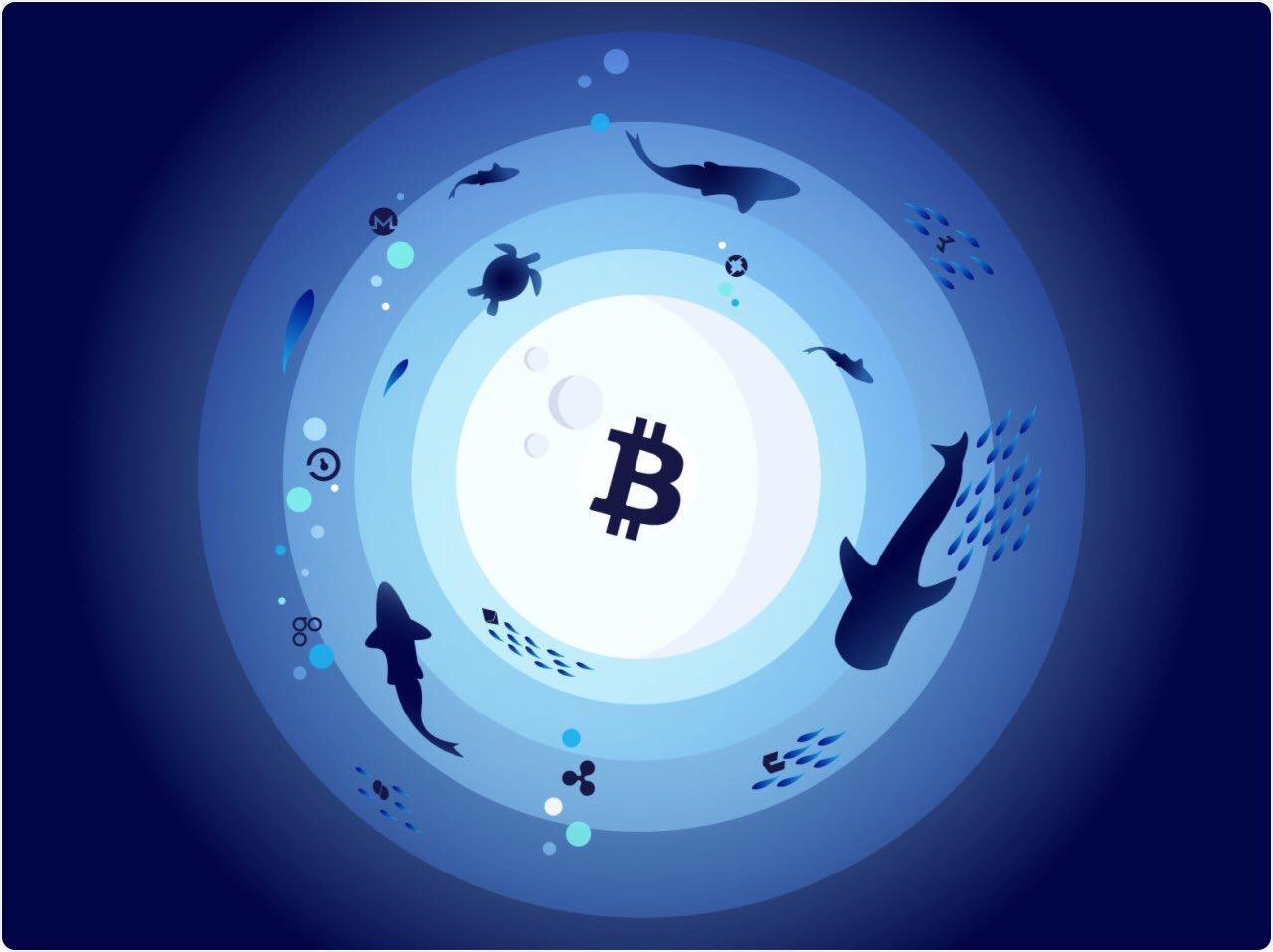 Crypto Aquarium