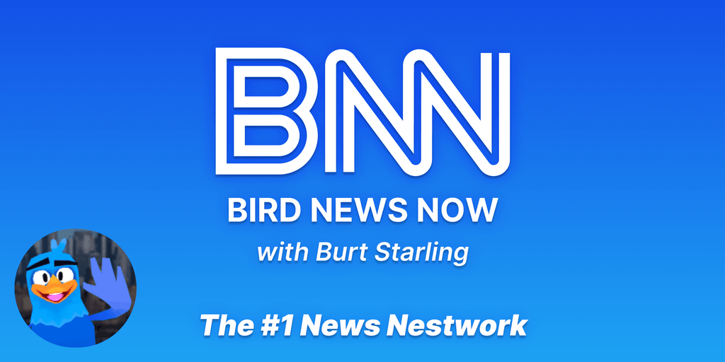 Bird News Now - A new way to get your breaking news 🐣 | Product Hunt