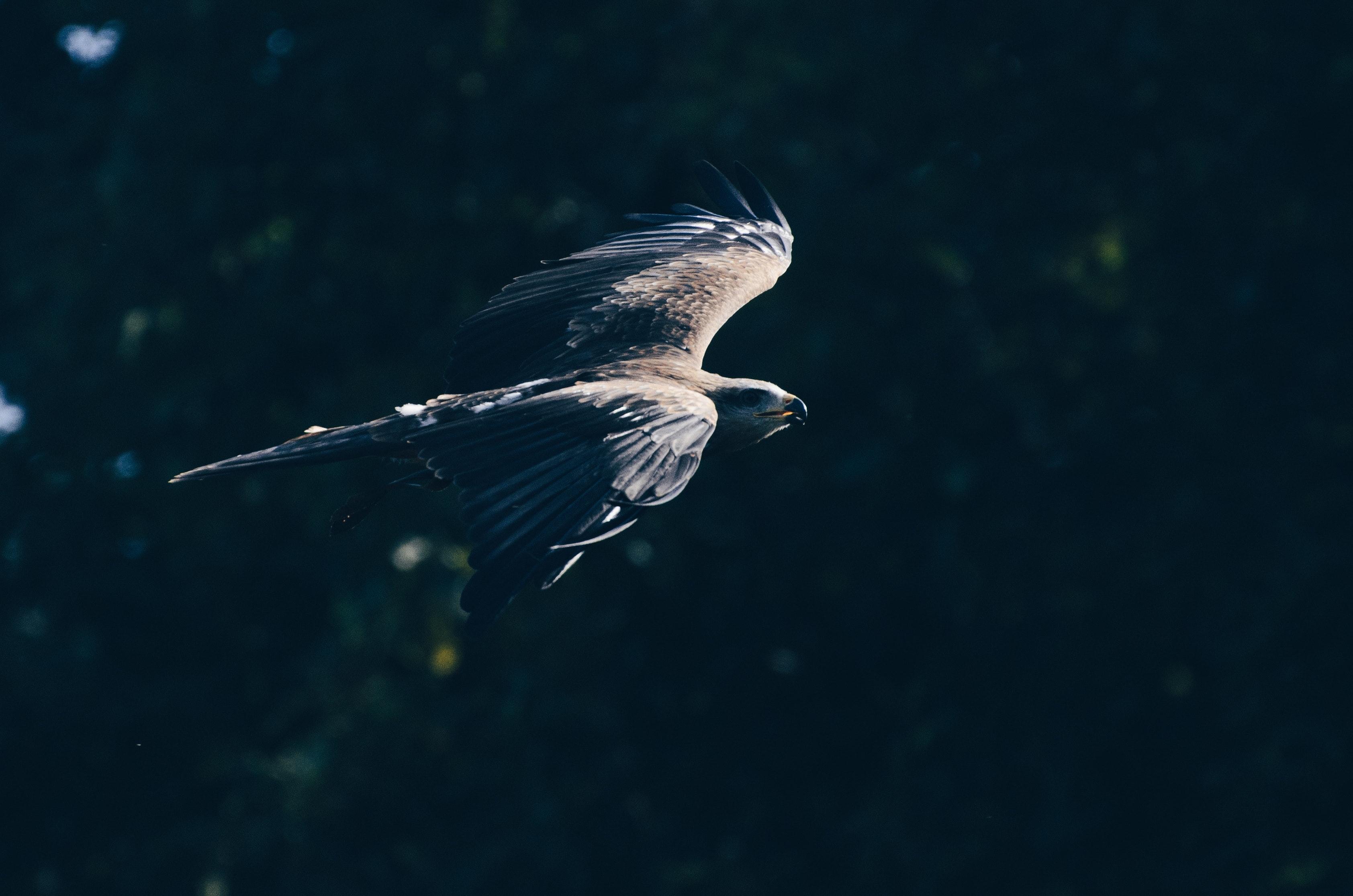 Hawkscore