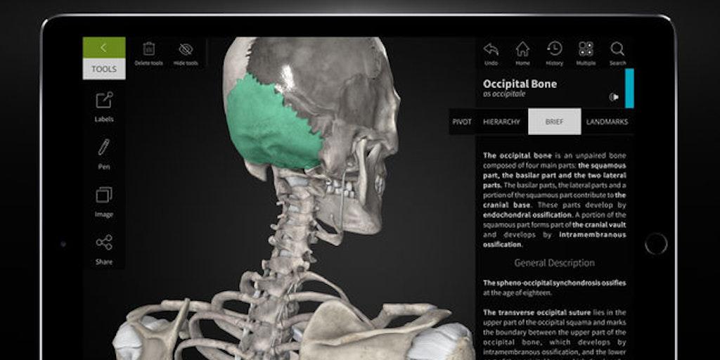 Flipboard Anatomyka Interactive 3d Human Anatomy